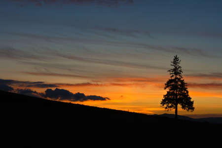 magic hour: Lonely Tree