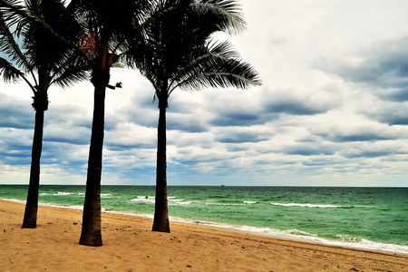 three palm trees: Three palm trees are shown close to the surf at a South Florida beach under cloud cover, outside of Fort Lauderdale, Florida. Stock Photo