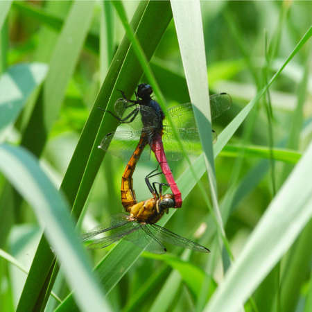 Love of Dragonflies photo