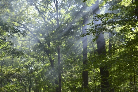 Sunrays shining through the trees in the forest.  Imagens