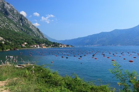 Mussel farm on beautiful Unesco protected Kotor Bay Montenegro photo