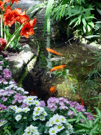 ripple: Fish swim over tossed coins in a garden.