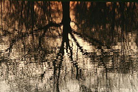 The silhouette of a tree reflecting in a pond.