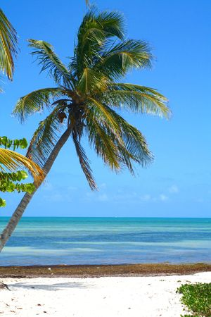 A remote beach looking out on the turquoise waters with a palm leaning into the picture.