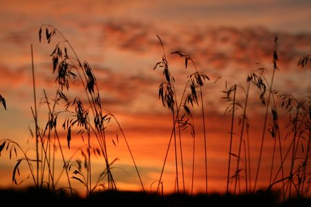 Grass is silhouette against the clouds reflecting the colors of sunset. Stock Photo