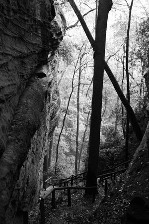 A trail weaver down through a canyon and into a forest in this black and white image Banco de Imagens