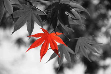 Colorful foliage standing out in this selective color image.