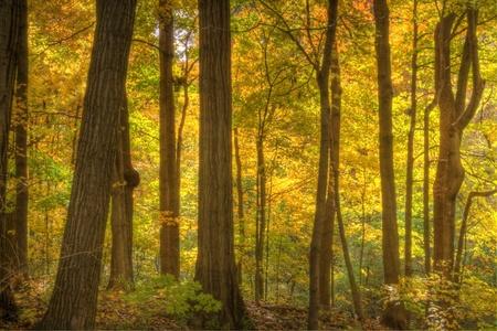 Eine Gesamtstruktur Ful erhltlich Herbst Farben. Standard-Bild - 8825298