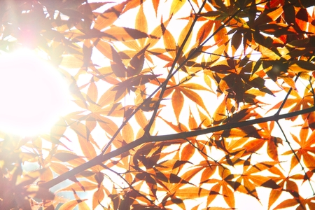 Oranges leaves over exposed with sunlight passing through them. Stock Photo