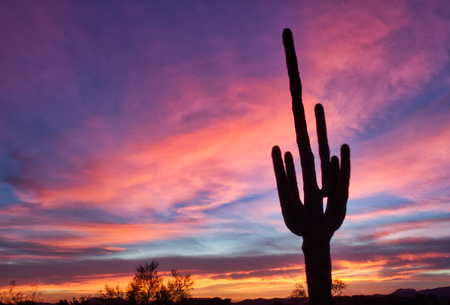 A brilliant sunset with a saguaro cactus silhouetted in the foreground. Stock Photo