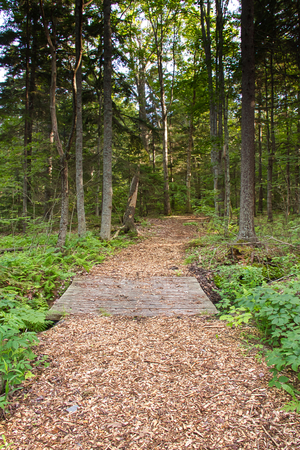 A trail through the forest in Prouts Neck Bird Sanctuary at Black Point, Maine.