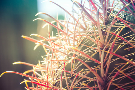 Close up image of the red spikes of a cactus with the background blurred out for copy space.