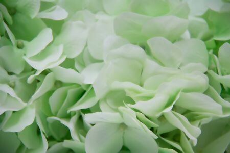 Closeup of artificial green flowers suitable for wedding invitations and other announcements that need a soft background.