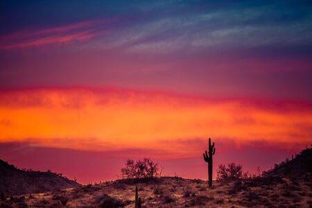 A Sunset over a Saguaro Cactus in the Sonoran Desert of Arizona. Stock Photo