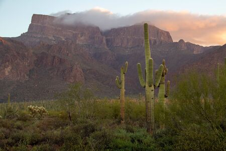 The Superstition Mountains of Arizona in morning light with Saguaro cactus and clouds.
