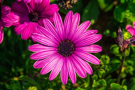 Detail of a large purple flower with vibrant colors centered in the image from the gardens at the base of the North Seoul Tower in South Korea.