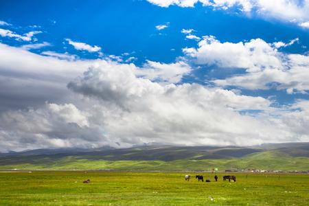 northwest: Northwest grassland
