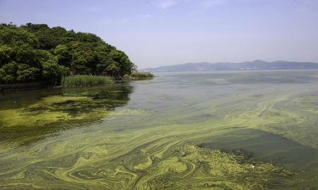 jiangsu: The polluted water of Taihu lake by cyanobacteria bloom in Jiangsu province of China