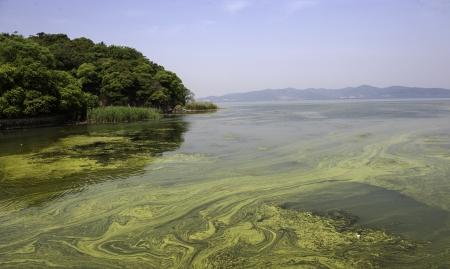 jiangsu: The polluted water of Taihu lake by cyanobacteria bloom in Jiangsu province of China. Stock Photo