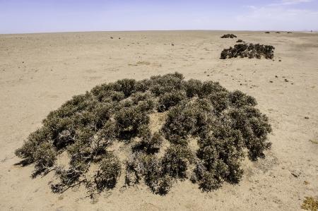 precipitaci�n: Los l�quenes en el desierto de Namib, donde la precipitaci�n media anual es de menos de 20 mm. Foto de archivo
