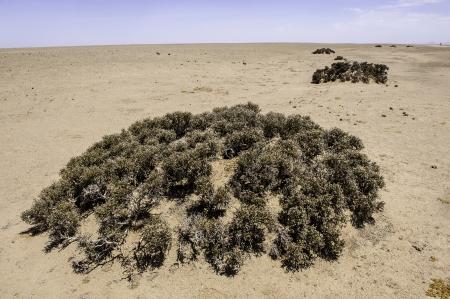 precipitation: The Lichens in Namib Desert where the average annual precipitation is less then 20mm
