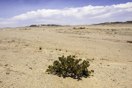 precipitacion: El d�lar de Bush en el desierto de Namib, donde la precipitaci�n anual promedio es de menos de 20 mm