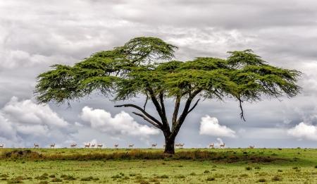 paisagem: O lago Naivasha, onde muitos dos animais selvagens viviam em