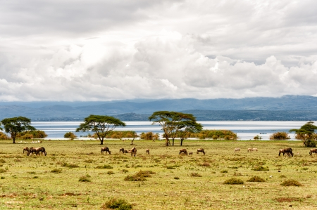 lake naivasha: The naivasha lake where lot of wildlife lived in  Stock Photo