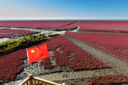 """red tube: la hierba Suaeda conocer como """"playa roja"""" en Panjin, provincia de Liaoning de China."""