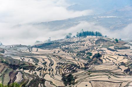 yuan yang: Yuan Yang Rice Terraces - Duoyi tree under the sunrise in yunnan province of China.