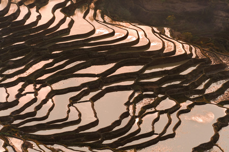 Yuan Yang Rice Terraces - 'Bada' under the sunset in yunnan province of China. photo