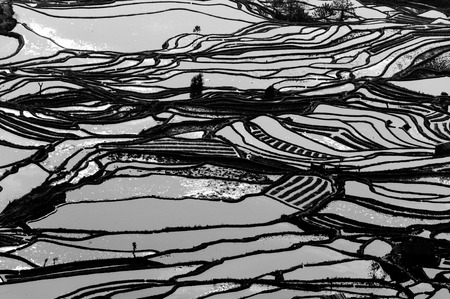 yuan yang: Yuan Yang Rice Terraces - Tiger Mouth under the sunset in yunnan province of China.
