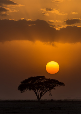 amboseli: Sunset with silhouette of African Acacia tree in Amboseli National Park, Kenya of Africa. Stock Photo