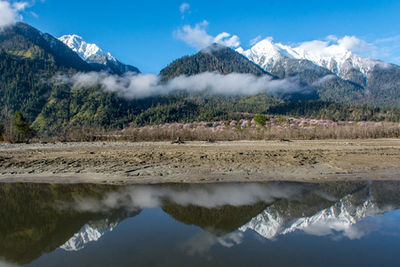 original ecological: The snow mountain with in front of the wild tibetan peach blossoms in Bo mi, tibetan plateau.