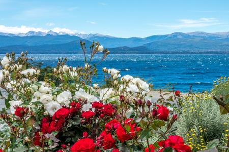 lake nahuel huapi: The Lake Nahuel Huapi in front of the rose flowers in Bariloche, Argentina.