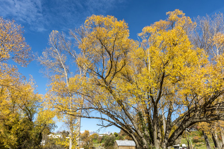 The colourful trees near lake Hayes, Arrow town in Autumn south island of New Zealand.