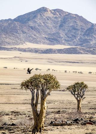 The gobi desert near Kries se Rus Campsite in Namibia.