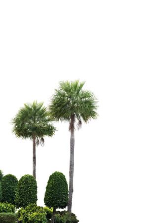 tropical evergreen forest: palm tree and garden isolated on white Stock Photo