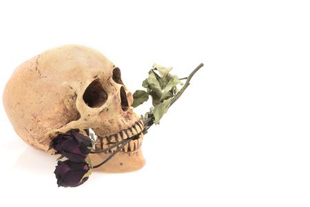 cadaver: still life ,Skull and dry rose isolated on white
