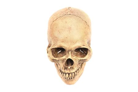 anatomically: Anatomically correct medical model of the human skull Stock Photo