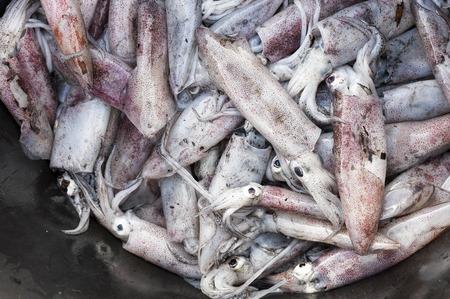 squids: Fresh Squids