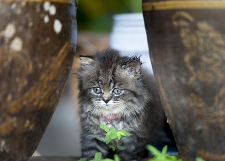 Little kitten sitting between blister