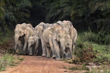 Wild Elephants in forest Stok Fotoğraf