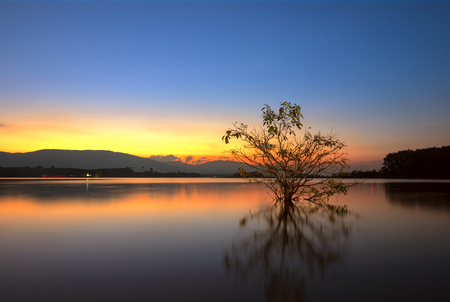 Dead tree in the lake at sunrise