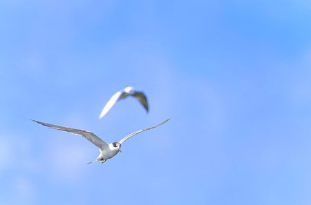 sea gull on ble sky background
