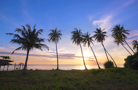 coconut tree on the beach at sunset