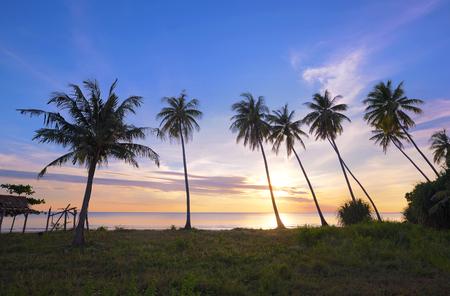 arbre de noix de coco sur la plage au coucher du soleil