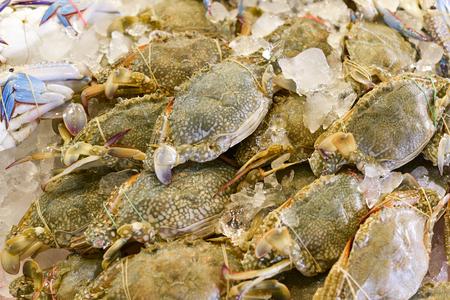 Flower crab, Blue crab, Blue swimmer crab, horse crab