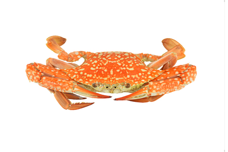 crab isolated on white clipping paths