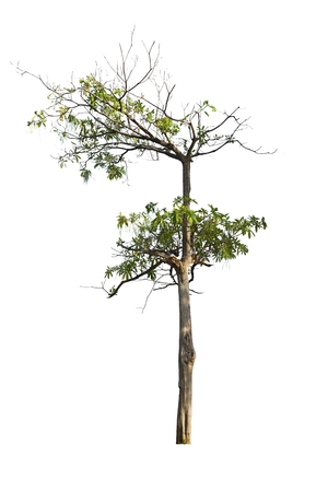 Single green leaf on dry branch